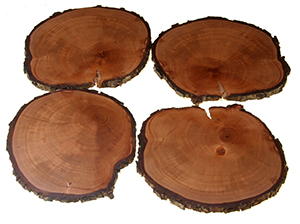 Set of 4 unique rustic Pear Tree Coasters
